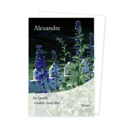 1464-fleurs-bleues-photo