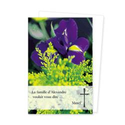 1466-iris
