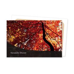 2877-chene-automne