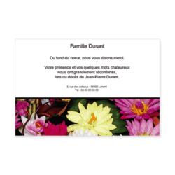 3017-fleurs-lotus